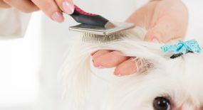 Visit our website if you want to express your opinion about mobile pet grooming.